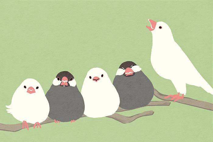 ヒラメキオリジナルデザイン「文鳥」 HIRAMEKI. original design