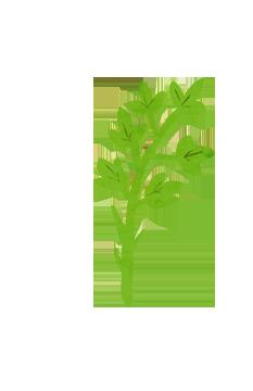 グリーンの葉