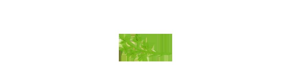 花-グリーン